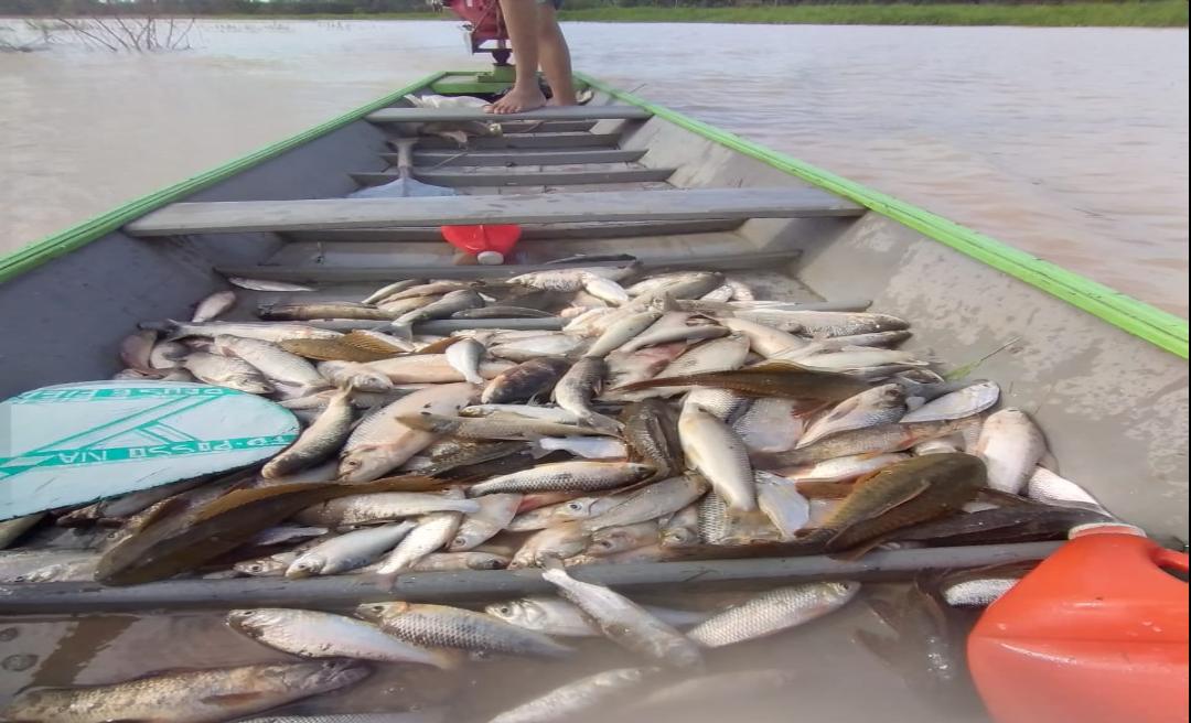 Piracema no Rio Tarauacá leva fartura de pescado e ameniza sofrimento das famílias atingidas pela enchente